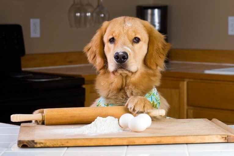 Dog making bread dough