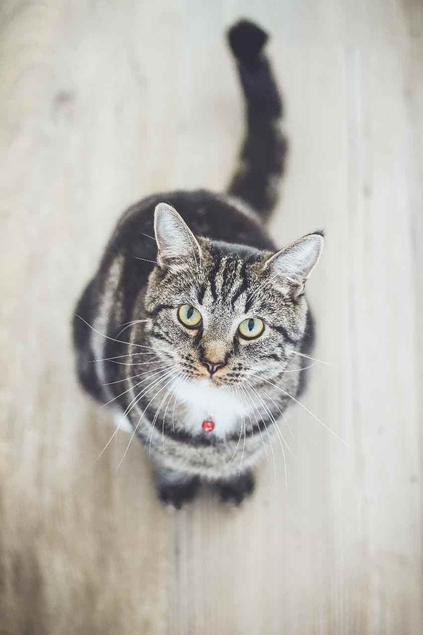 Cat looking up at camera