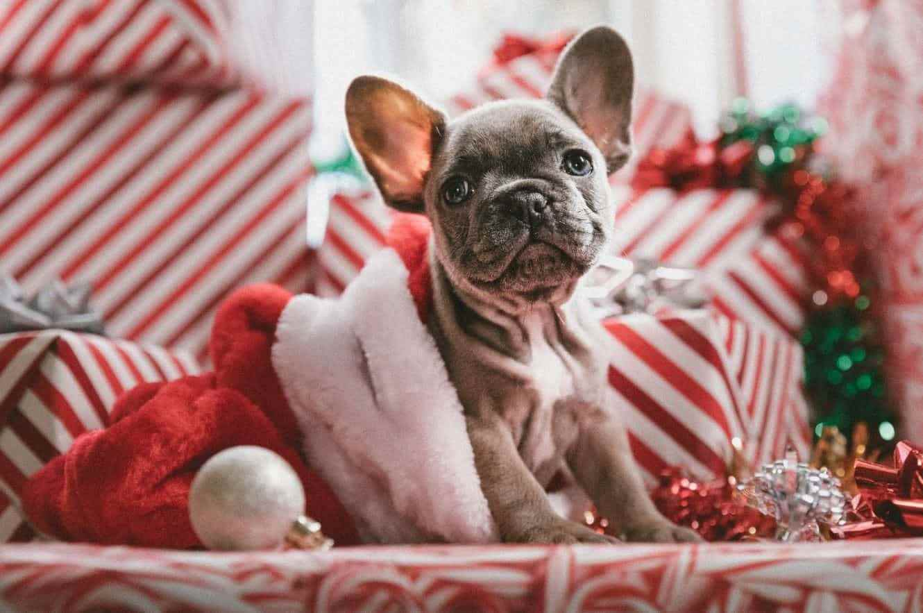 Puppy among Holiday gifts
