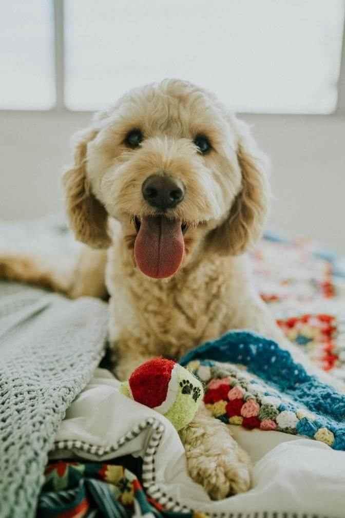 White dog on blanket