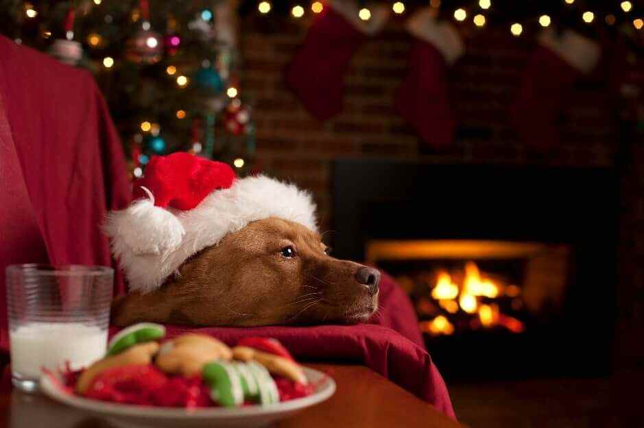 Dog wearing Christmas hat laying on couch