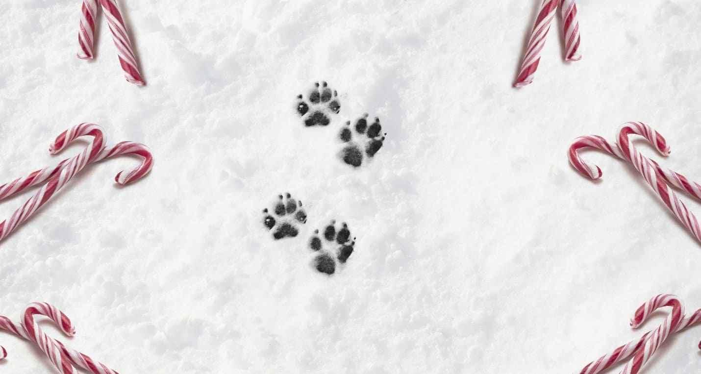 Dog's foot print on snow