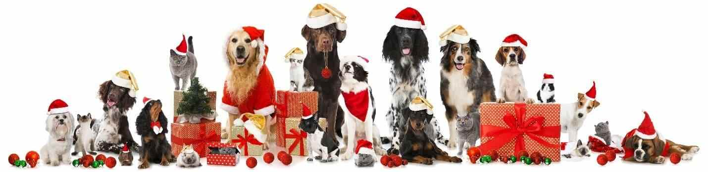 Dogs wearing Christmas costumes and Christmas presents
