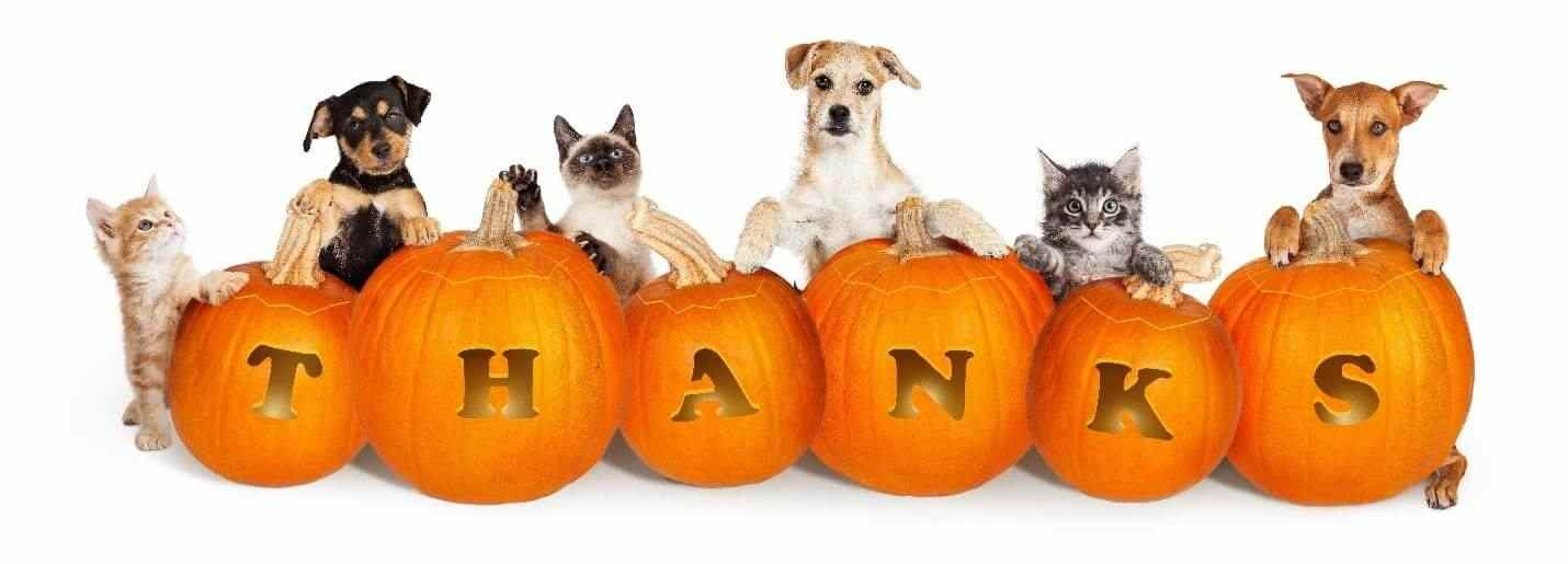 Dogs and cats holding thanks pumpkins