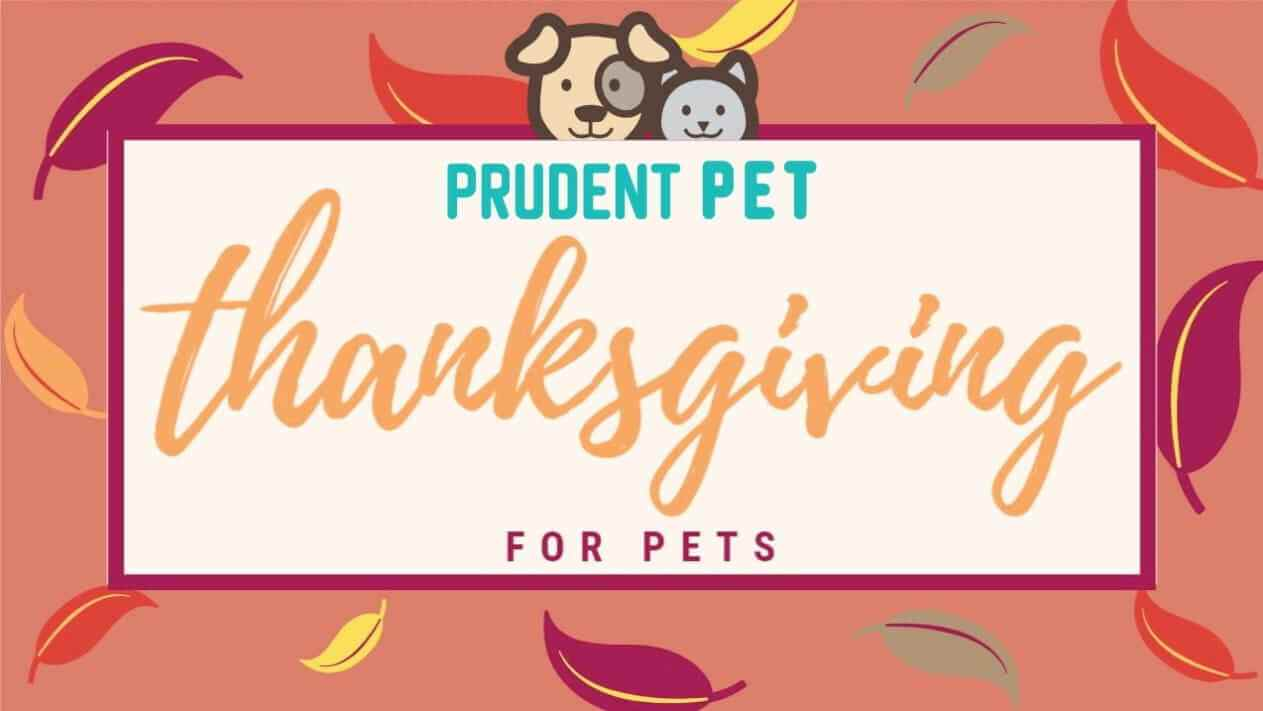 Thanksgiving with Dogs & Cats