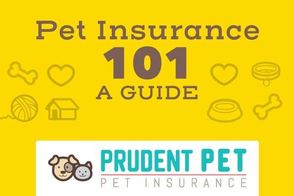 Pet Insurance 101 Guide