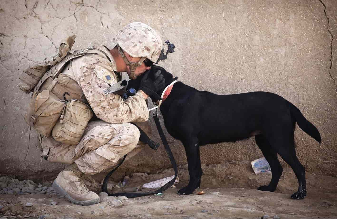Soldier and pitbull hug each other