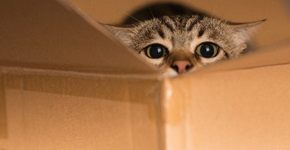 Cat in cardboard moving box