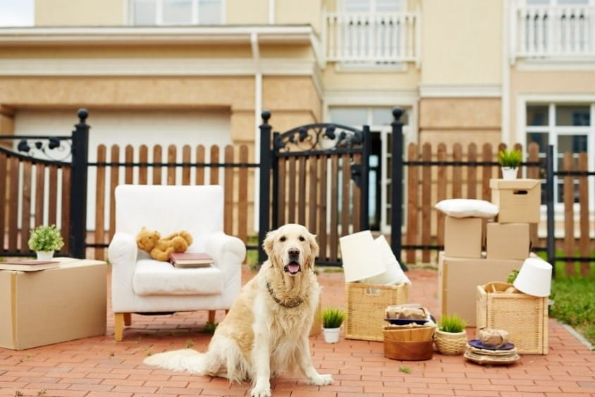 Dog moving into pet friendly house