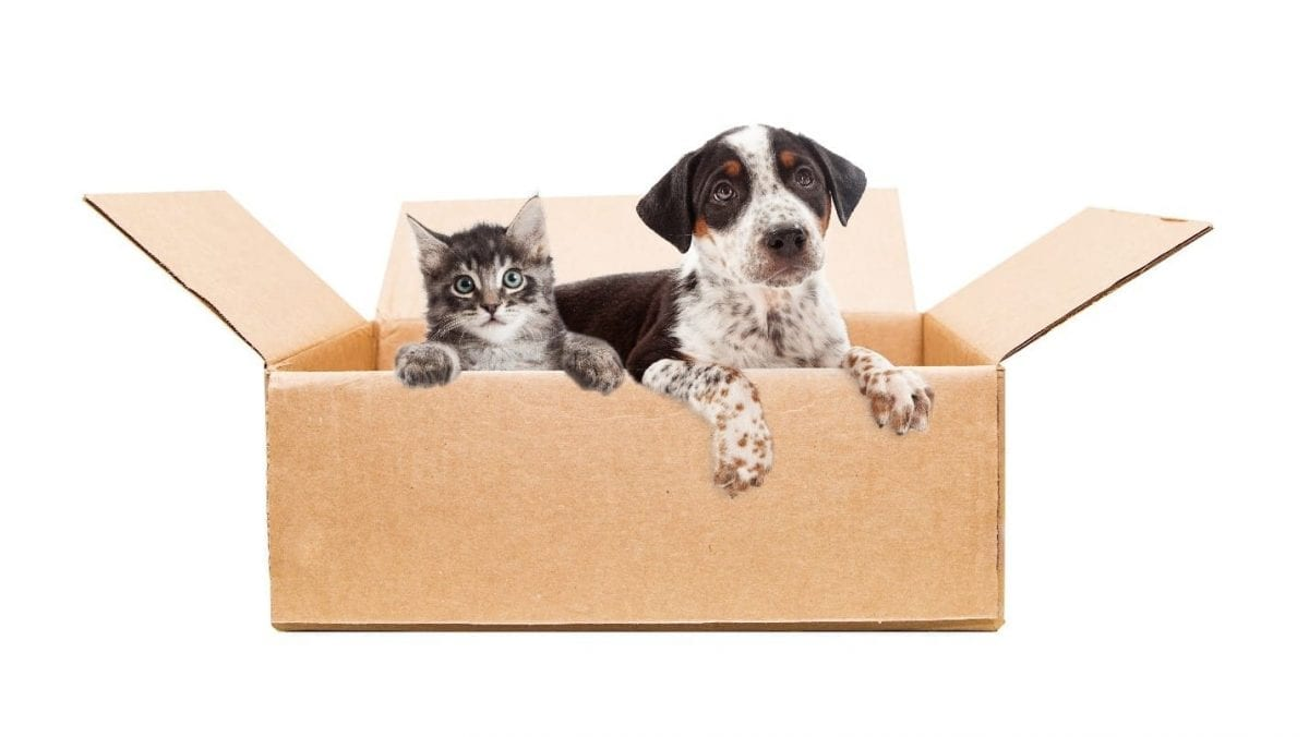 Dog and cat in moving box together