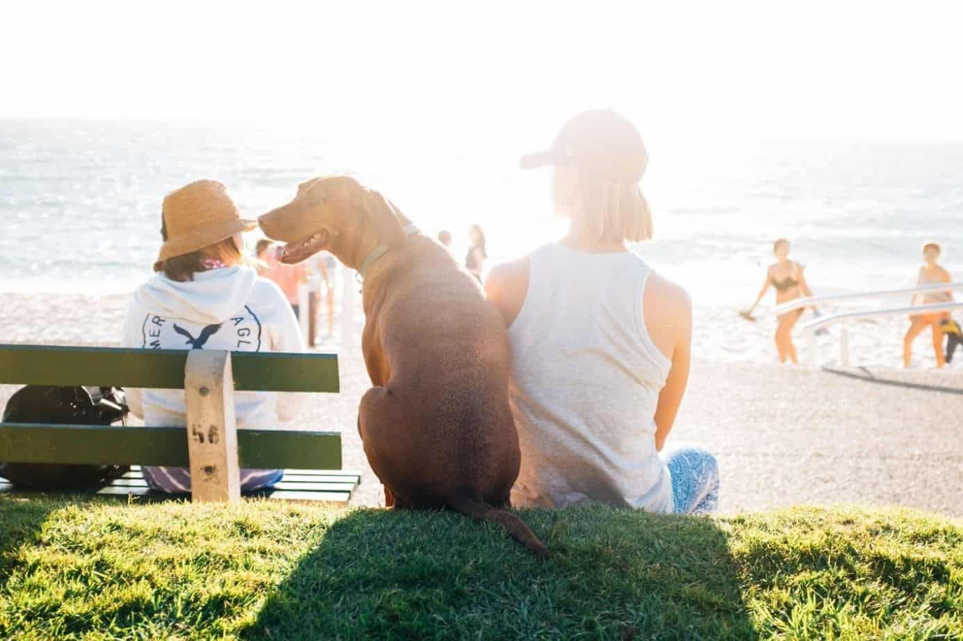 Dog and woman sits at beach in summer
