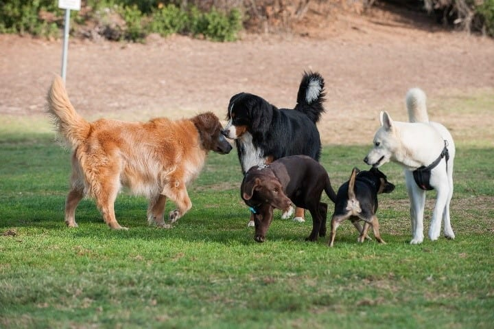 A variety of dogs playing at parl