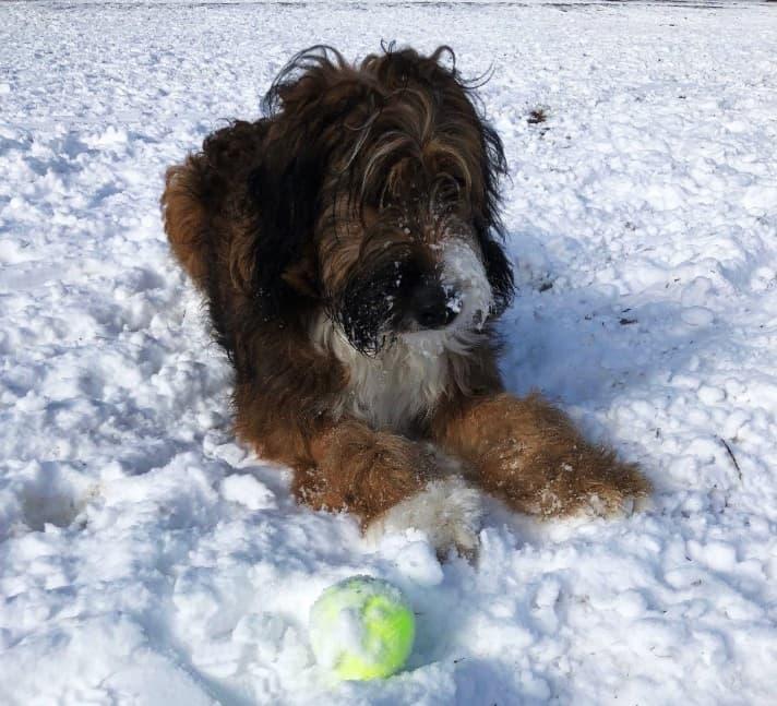 Leon in snow
