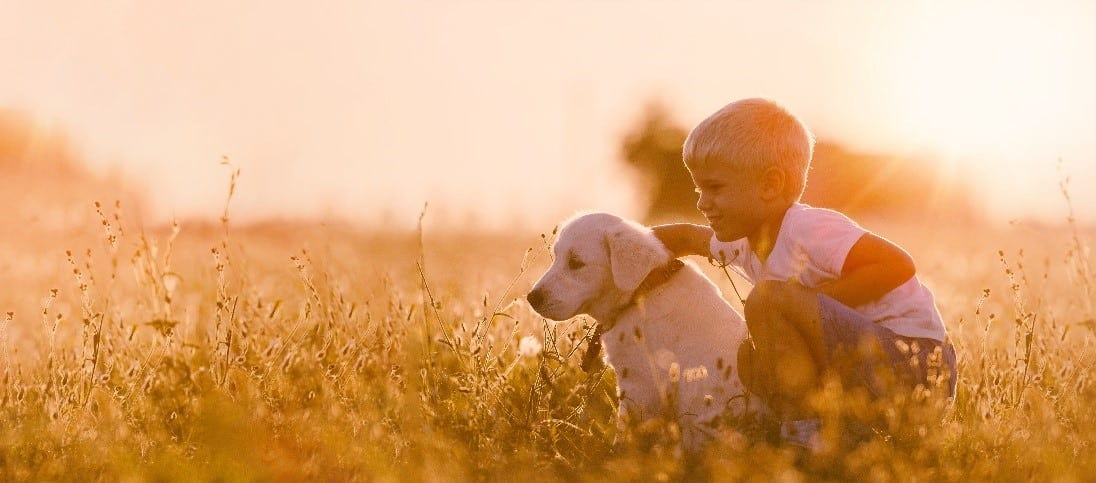 Little boy and puppy at field