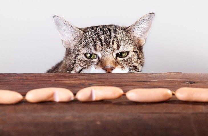 Cat looks at wiener sausages