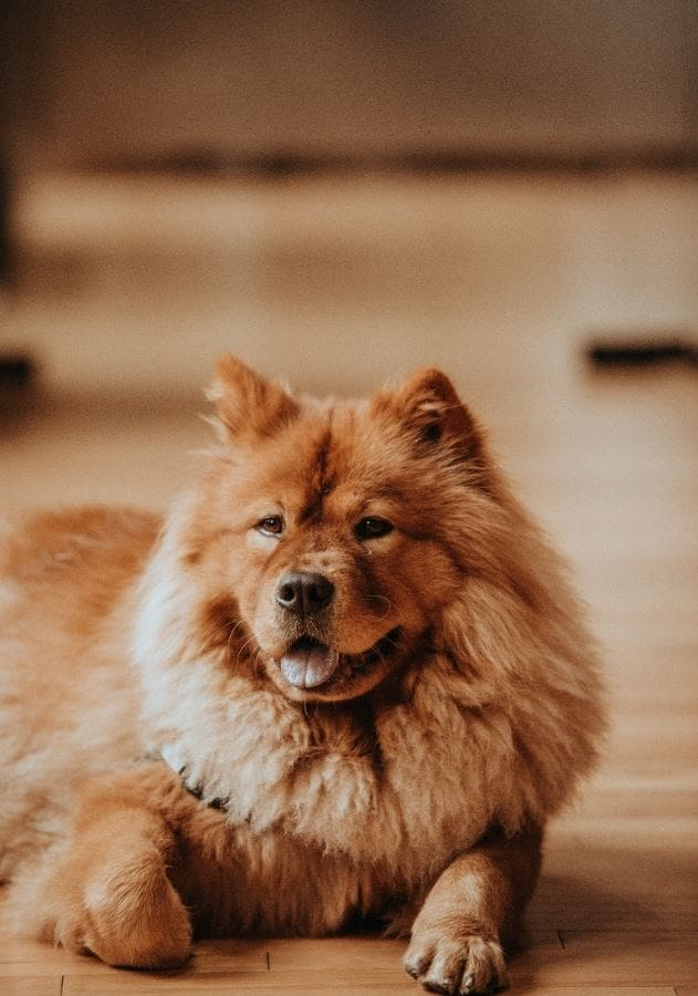 How to treat mental health disorders in dogs