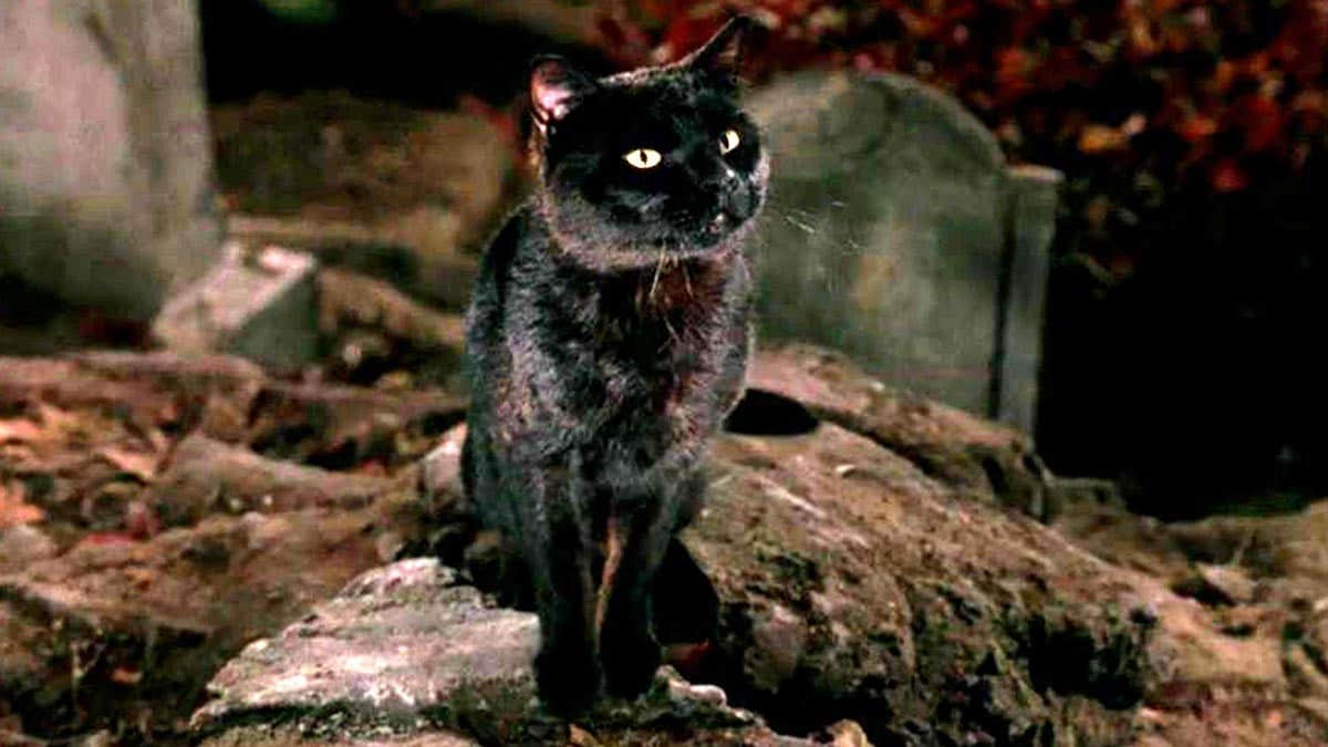 Hocus Pocus is a spooky flick and a great watch for witches and cat lovers