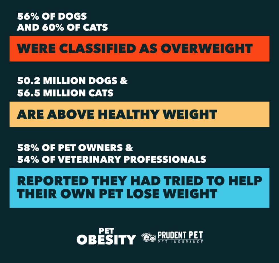 Pet obesity stats from Prudent Pet