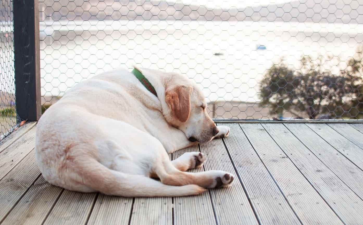 Dog napping on a deck outside