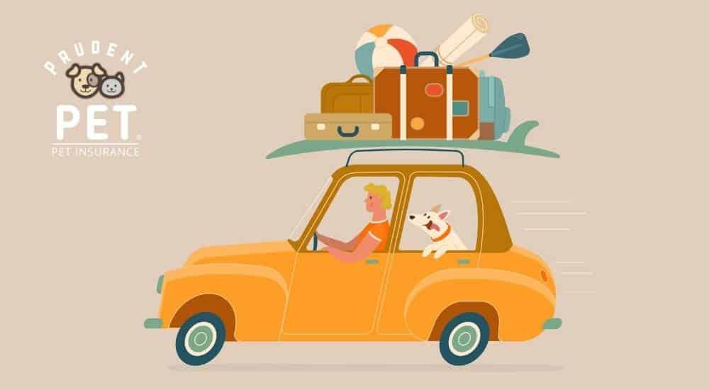 Orange car with human and dog traveling illustration