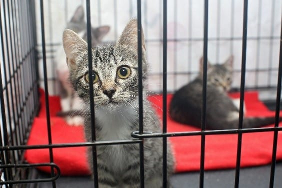 Cats stay in a cage