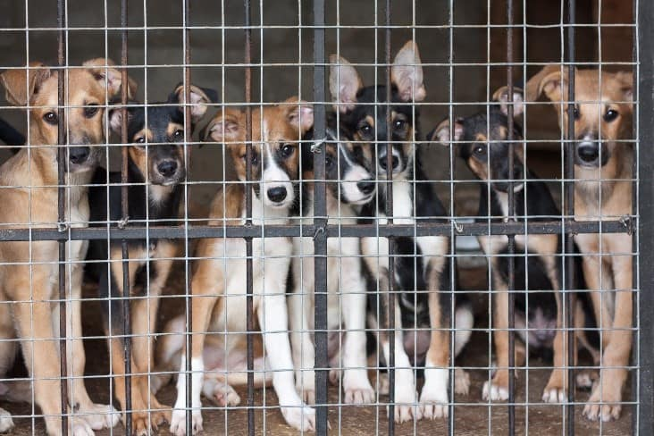 Many breeds of dogs in cage