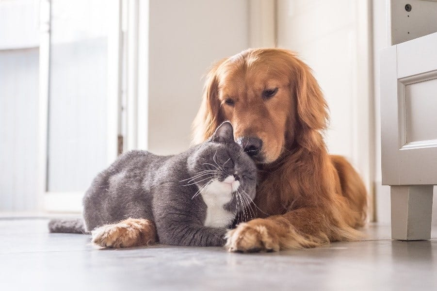 Cat and dog cuddling on the floor