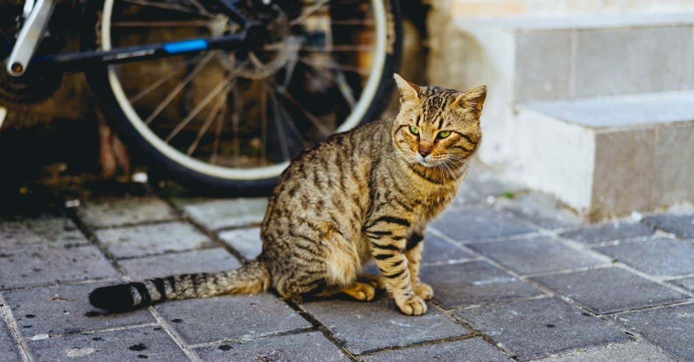 Missing cat sitting on the street