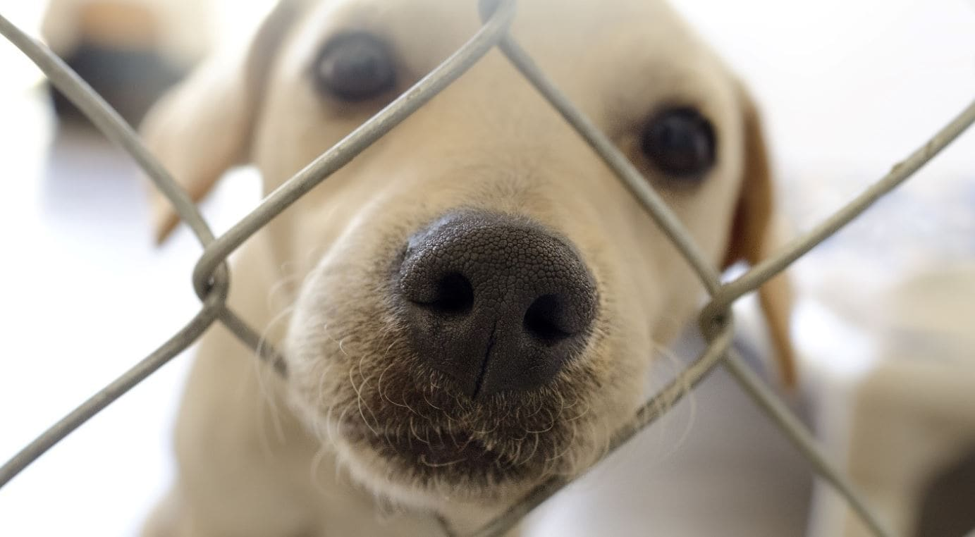 White mixed dog in cage close up