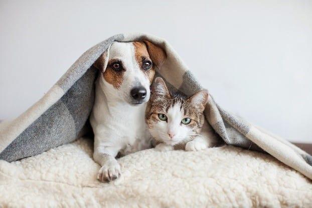 Dog & cat in blanket together