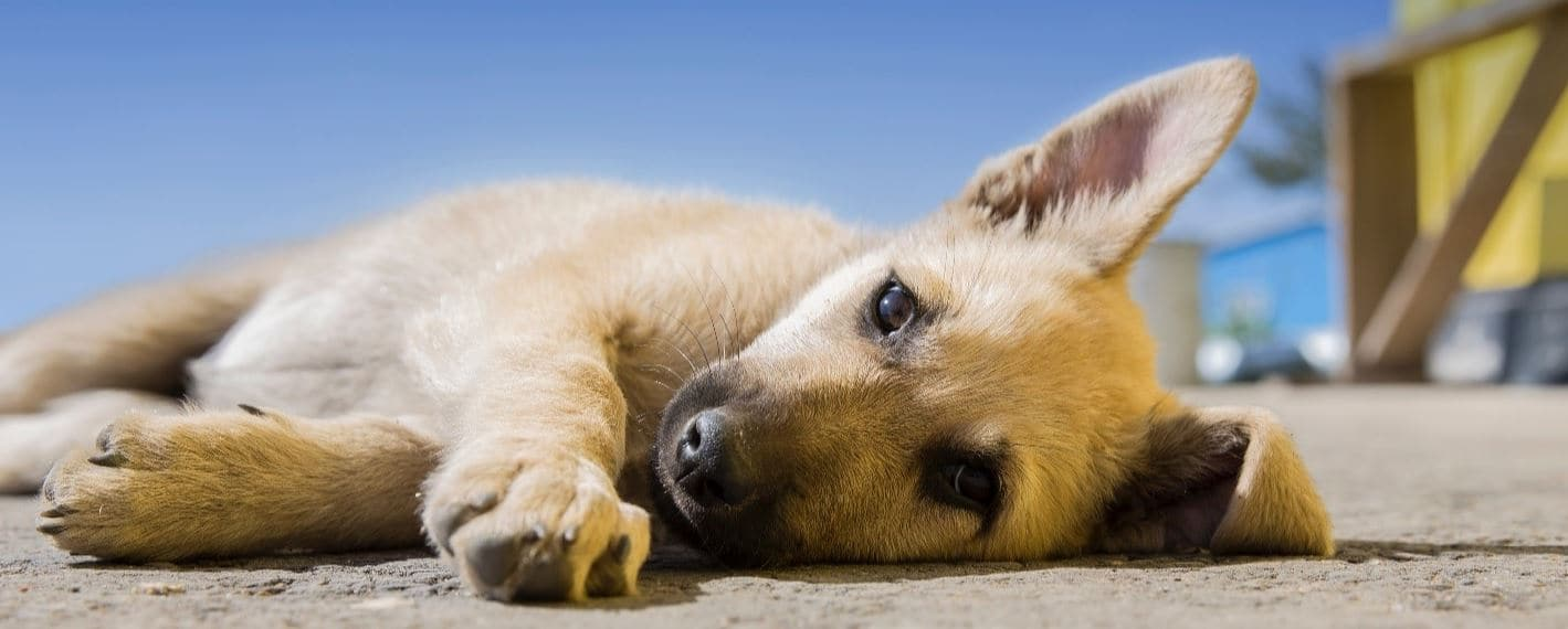 Puppy lying on floor