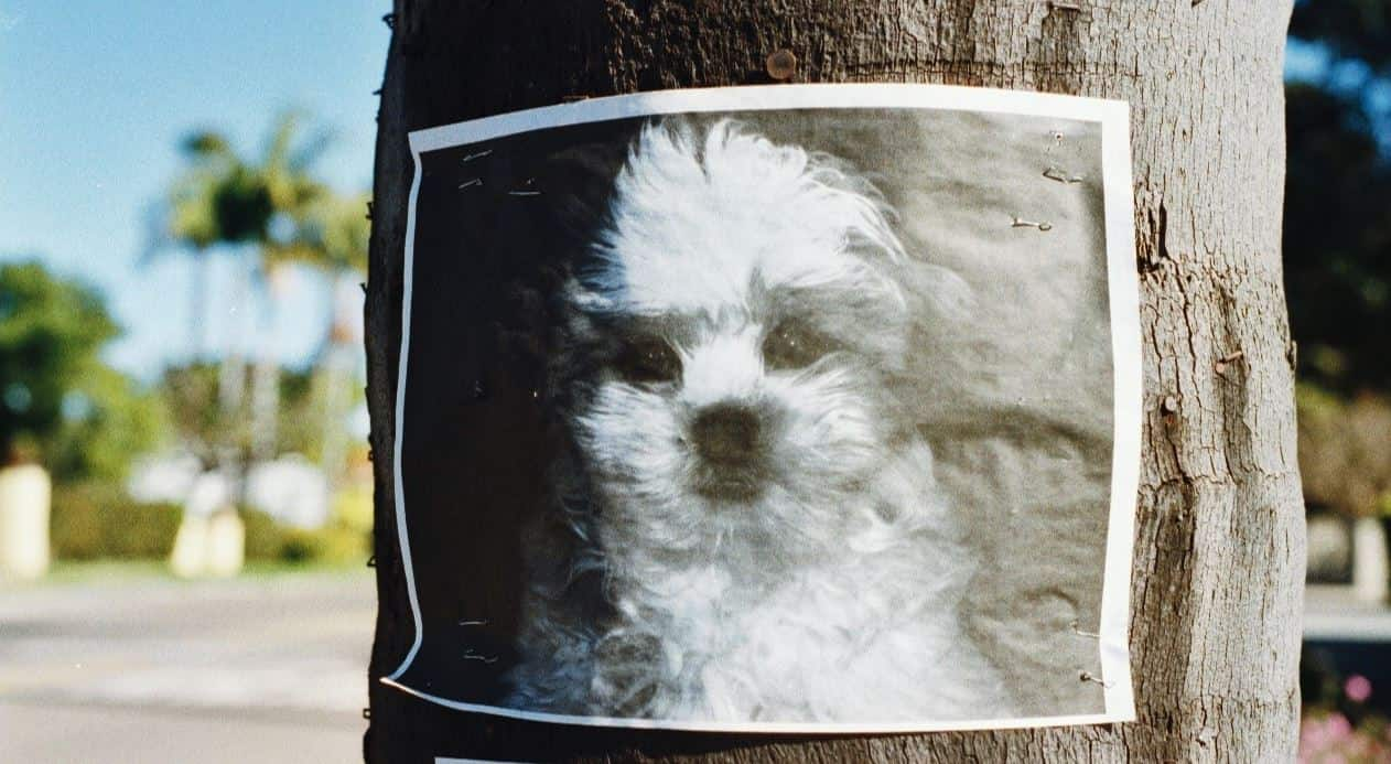Missing dog posted on the tree