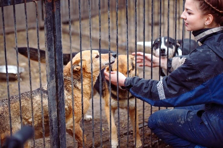 Rescue and shelter employee petting dogs in cage