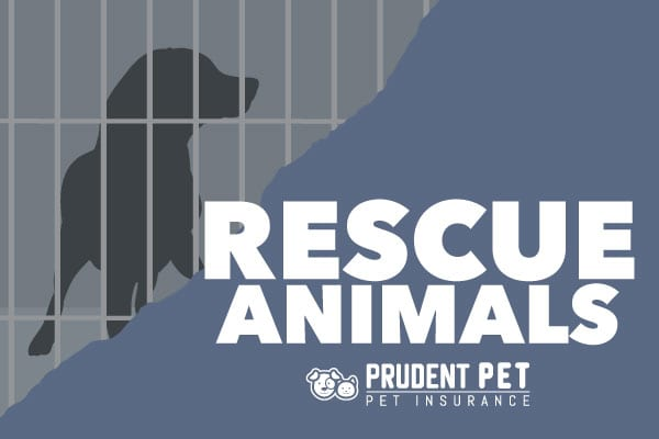 Rescue Animals banner for Prudent Pet