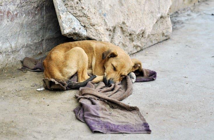 Sleeping street dog on the street
