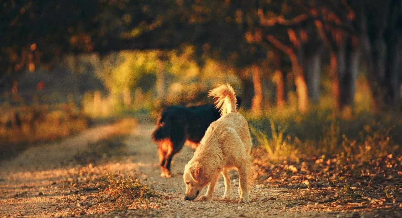 Two dogs sniffing on the roads