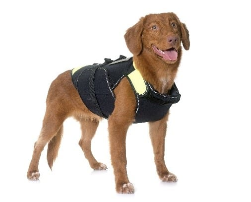 Dog wearing a dog storm jacket
