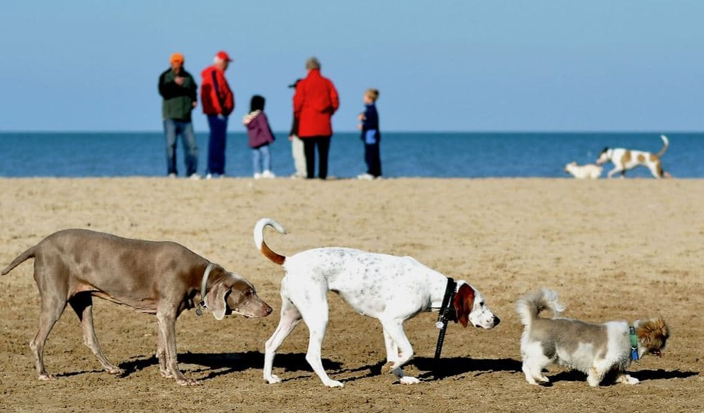 Dogs in line at beach