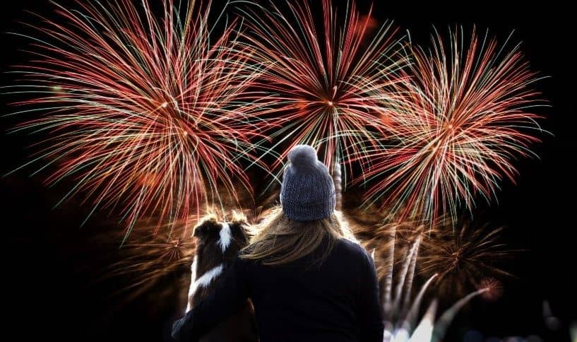Dog at a fireworks festival