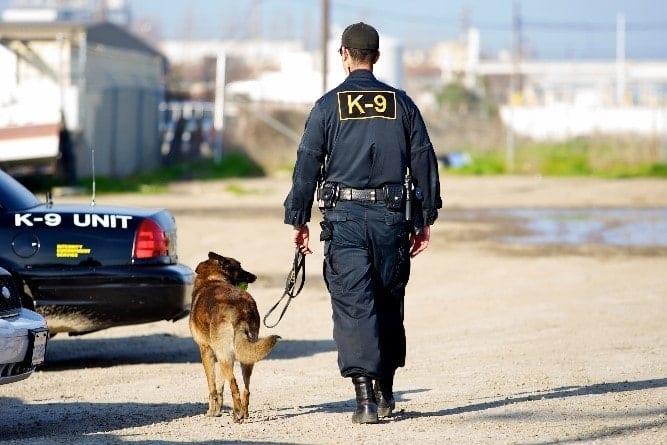 K9 officer and dog walk together