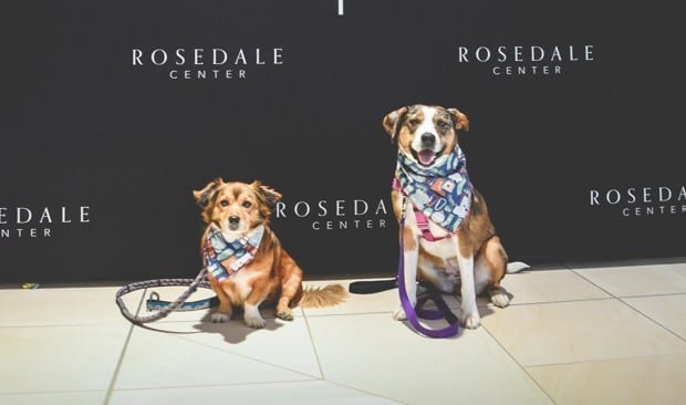 300 dogs went to Rosedale Center Winter Mall the first weekend