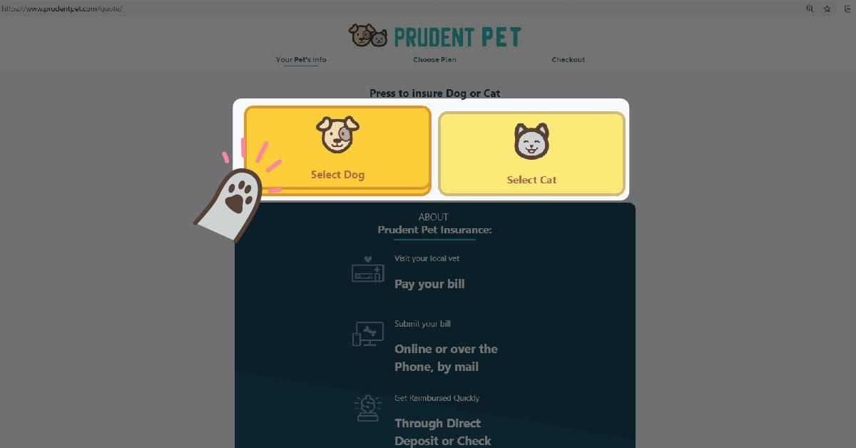 How to get a pet insurance: Step 2