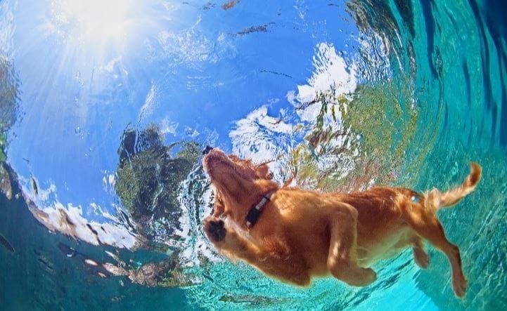 Dog swimming a pool