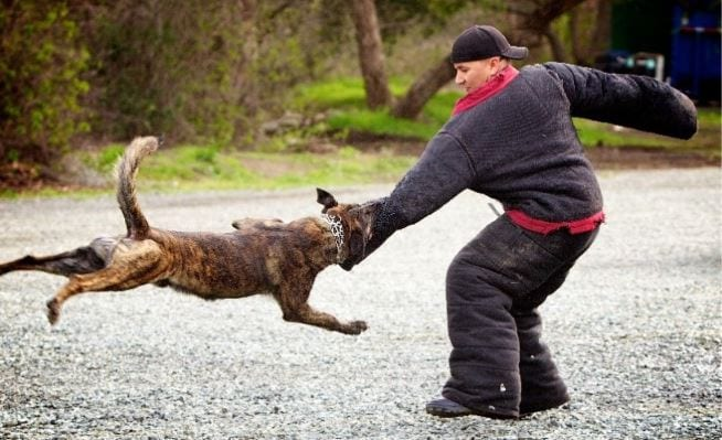 K9 dog in training with a trainer