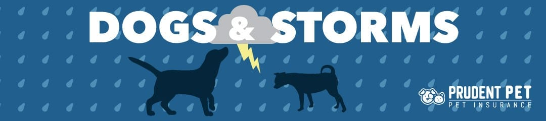 Dogs and Storms post from Prudent Pet