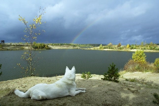Dog looking at rainbow over the lake