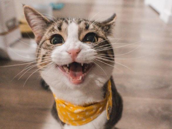 Senior cat close up shot