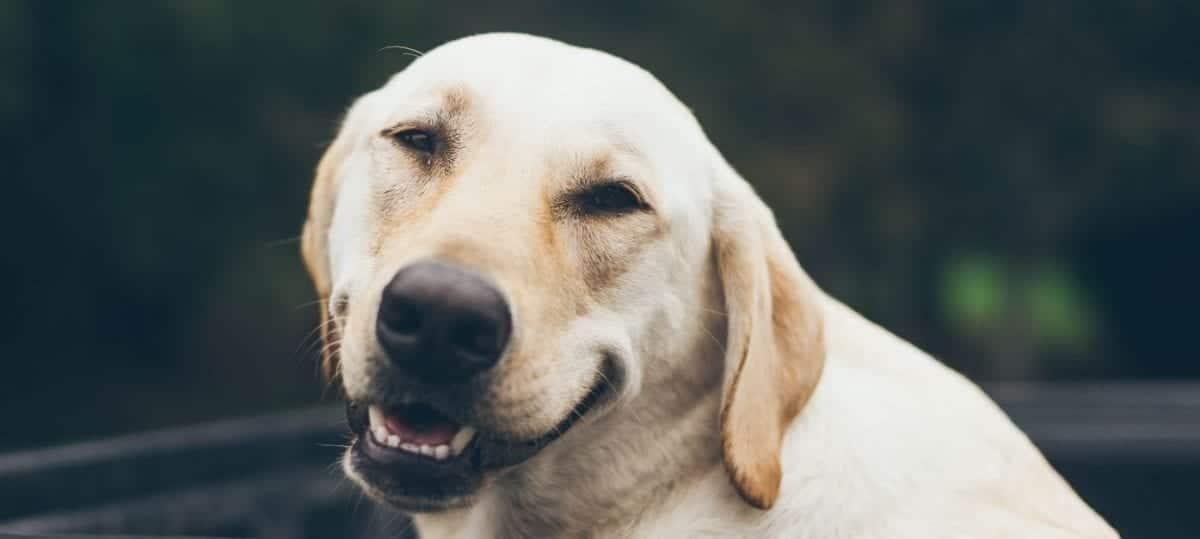 Senior dog close up at park