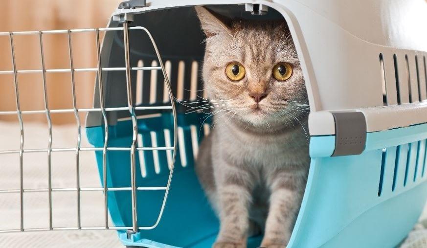 Cat visit vet