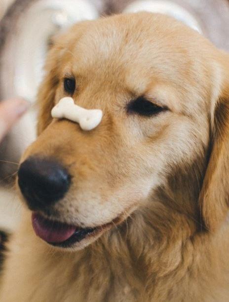 Treat on dog's nose
